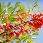 El inicio de la primavera: celebraciones y significado