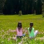 Mayo: primavera de comuniones y enraizamientos